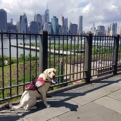 Seizure Response Service Dog Delivered to Woman with Epilepsy in Brooklyn, NY
