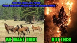 Can Catastrophic Wildfire and Toxic Smoke be Controlled by Logging as Posited by Department of the Interior Secretary Ryan Zinke?