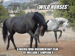 Film Festival Intrigued Filmmaker's Combination of UAV Filmography, Wild Horses & Wildfire