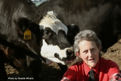 An Evening with Temple Grandin: Connecting Animal Behavior & Autism - September 12, 2018