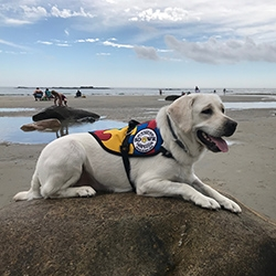 Autism Service Dog from SDWR Delivered to 7-Year-Old Boy in York, Maine