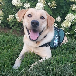 Diabetic Alert Dog Delivered to 10-Year-Old Boy with Type 1 Diabetes in Ontario, Canada