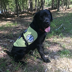 Diabetic Alert Dog Delivered to Woman with Type 1 Diabetes in Holly Springs, NC