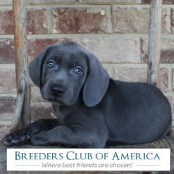 You Can Now Buy Your Cute Little Puppy with Crypto Currencies from Breeders Club of America