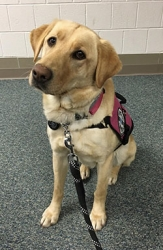 Custom Trained Diabetic Alert Dog Delivered to Family in Kettering, Ohio