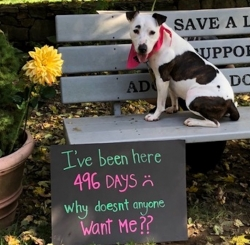Canine Company Launches Campaign to Find a Home for Dog That's Spent 500 Days in a Shelter
