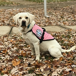 Diabetic Alert Dog Delivered to 8-Year-Old Girl in Sand Lake, MI