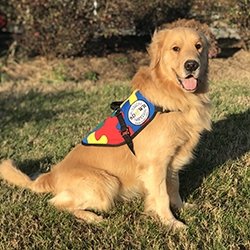 Autism Service Dog Delivered to Assist 6-Year-Old Boy in Powell, OH