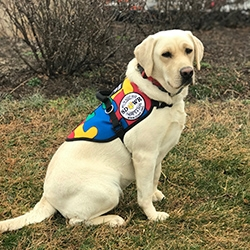 Autism Service Dog Delivered to Assist 7-Year-Old Girl in San Francisco, CA