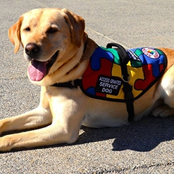 $10,000 SDWR Autism Service Dog Grant Awarded to 8-Year-Old Boy in Gaithersburg, MD