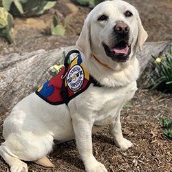 Autism Service Dog Delivered to Assist 7-Year-Old Boy in Monroe, NJ