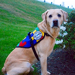 $12,500 SDWR Autism Service Dog Grant Awarded to 8-Year-Old Boy in Lawrence, MA