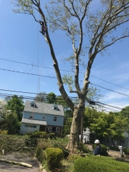 New York Long Island Tree Service is Fully Equipped and Prepared for Emergency Tree Removal When Strong Winds Take Down Trees This Year 2019