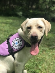 Autism Service Dog Delivered to Assist 7-Year-Old Girl in Mississippi