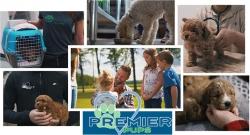 PremierPups.com Reveals Valuable Insights About the Premier Promise