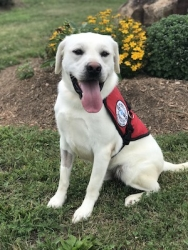 Diabetic Alert Service Dog Delivered by SDWR to Woman in Pinehurst, Idaho