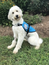 Diabetic Alert Service Dog Delivered by SDWR to Family in Highlands Ranch, CO
