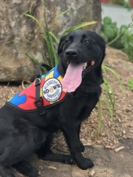 Autism Service Dog Delivered by SDWR to Family in Allentown, PA