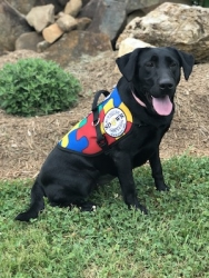 Autism Service Dog Delivered by SDWR to Assist Family in Roseville, CA