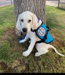 Family from Prescott, AZ is Showing Their Way of Paying It Forward Through an SDWR Service Dog Volunteer Experience
