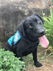 Diabetic Alert Service Dog Delivered by SDWR to Family in Rancho Santa Margarita CA