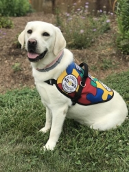 Autism Service Dog Delivered by SDWR to Young Girl in Corona, CA