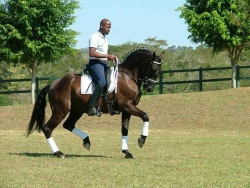 Day of the African Equestrian Returns to North Carolina on October 19th