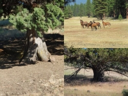 Rancher, Logger, Author and Naturalist William E. Simpson II Disagrees with DOI's Plan of Burning America; Says It Adds to Mismanagement of Wild Horses