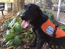 Autism Service Dog Delivered by SDWR to a Young Boy in Philadelphia, PA