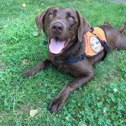Seizure Response Dog Delivered by SDWR to a Very Lucky Man in West Haven, CT