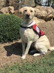 Diabetic Alert Service Dog Delivered by SDWR to Family in Oak Ridge, NC