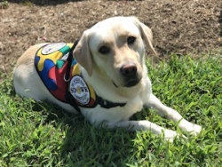 Autism Service Dog Delivered by SDWR to Family in Monroe, NJ