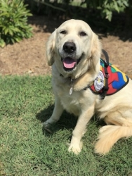 Autism Service Dog Delivered by SDWR to Family in Oceanside, NY
