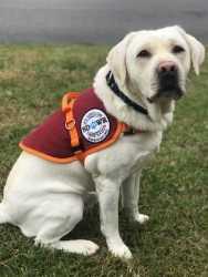 Autism Service Dog Delivered by SDWR to Family in Vinton, VA
