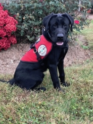 Diabetic Alert Dog Delivered by Service Dogs by SDWR to Lucky Woman from Homer, NY