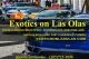 Exotics on Las Olas