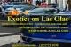 Exotics on Las Olas