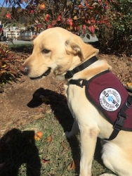 SDWR Delivers Diabetic Alert Dog to Lucky Boy in Torrington, CT