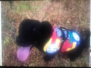 Autism Service Dog Delivered by SDWR to Family Located at Travis Air Force Base, CA