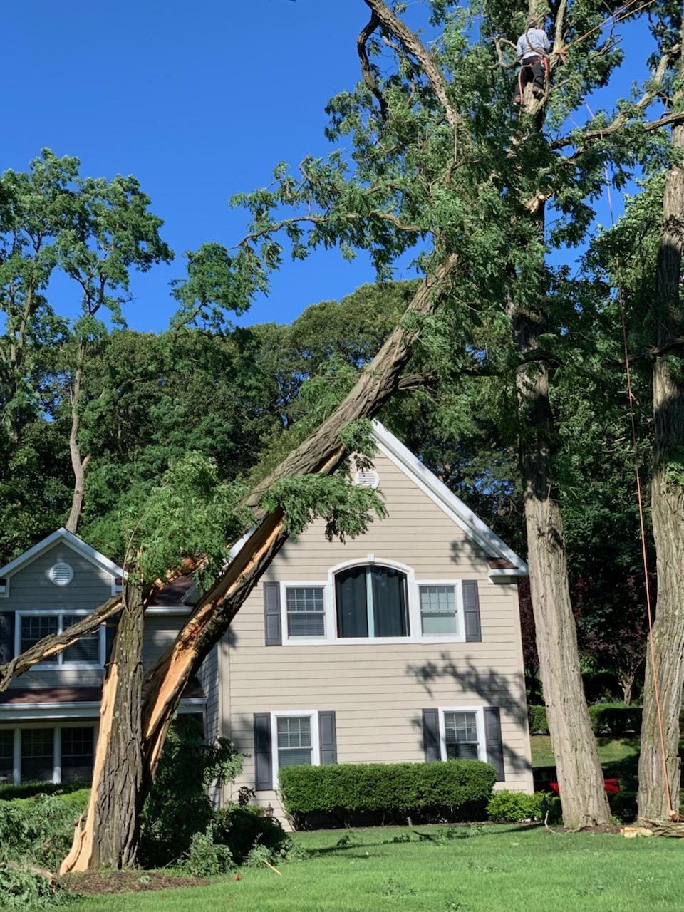 New York Long Island Tree Service Professionals Ready to Take Care of Any Tree Emergency for People Who Are Located in Suffolk County and Nassau in 2020