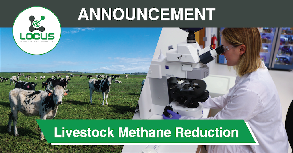 Leading California University Finds 78 Percent Reduction in Livestock Methane Emissions with Direct-Fed Microbials from Locus Fermentation Solutions