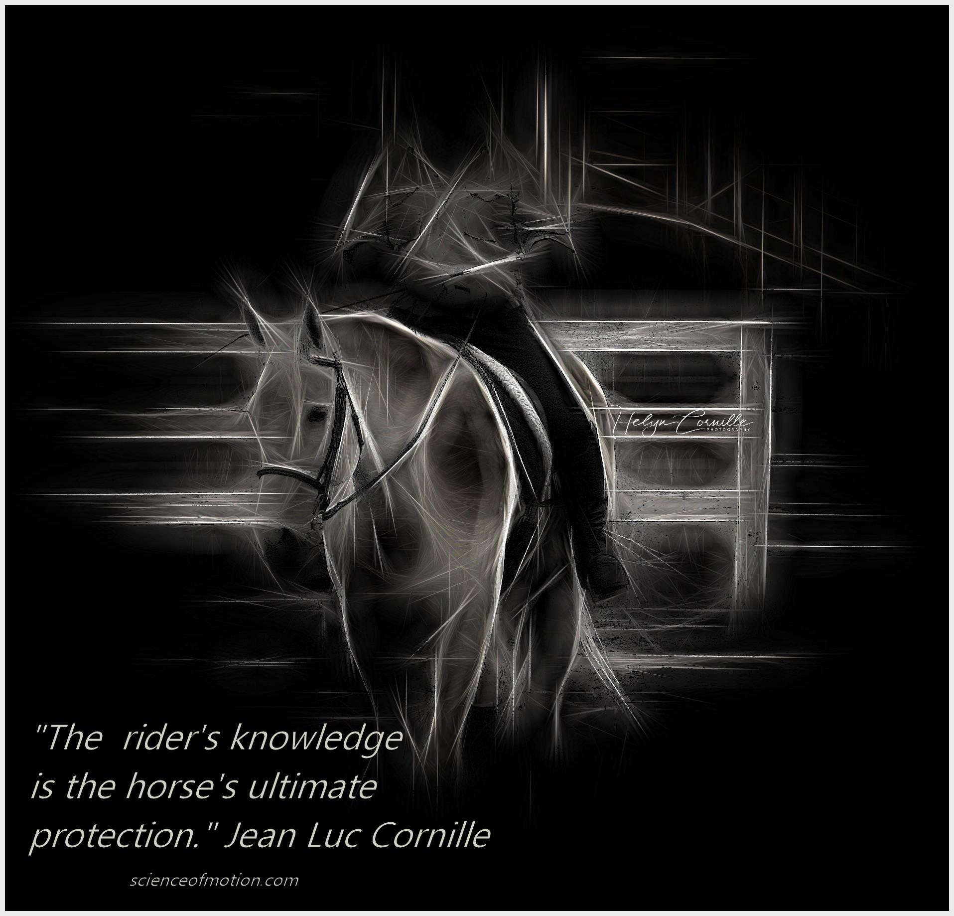 Equine Rider Training Program: