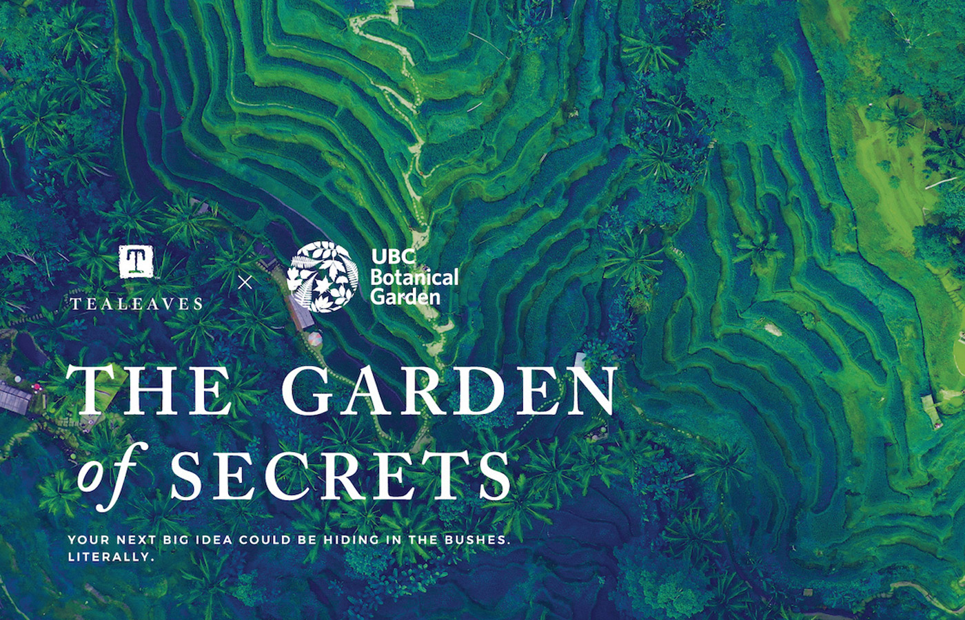 TEALEAVES' The Garden of Secrets Project Wins Honorable Mention in Fast Company 2020 World Changing Ideas Awards