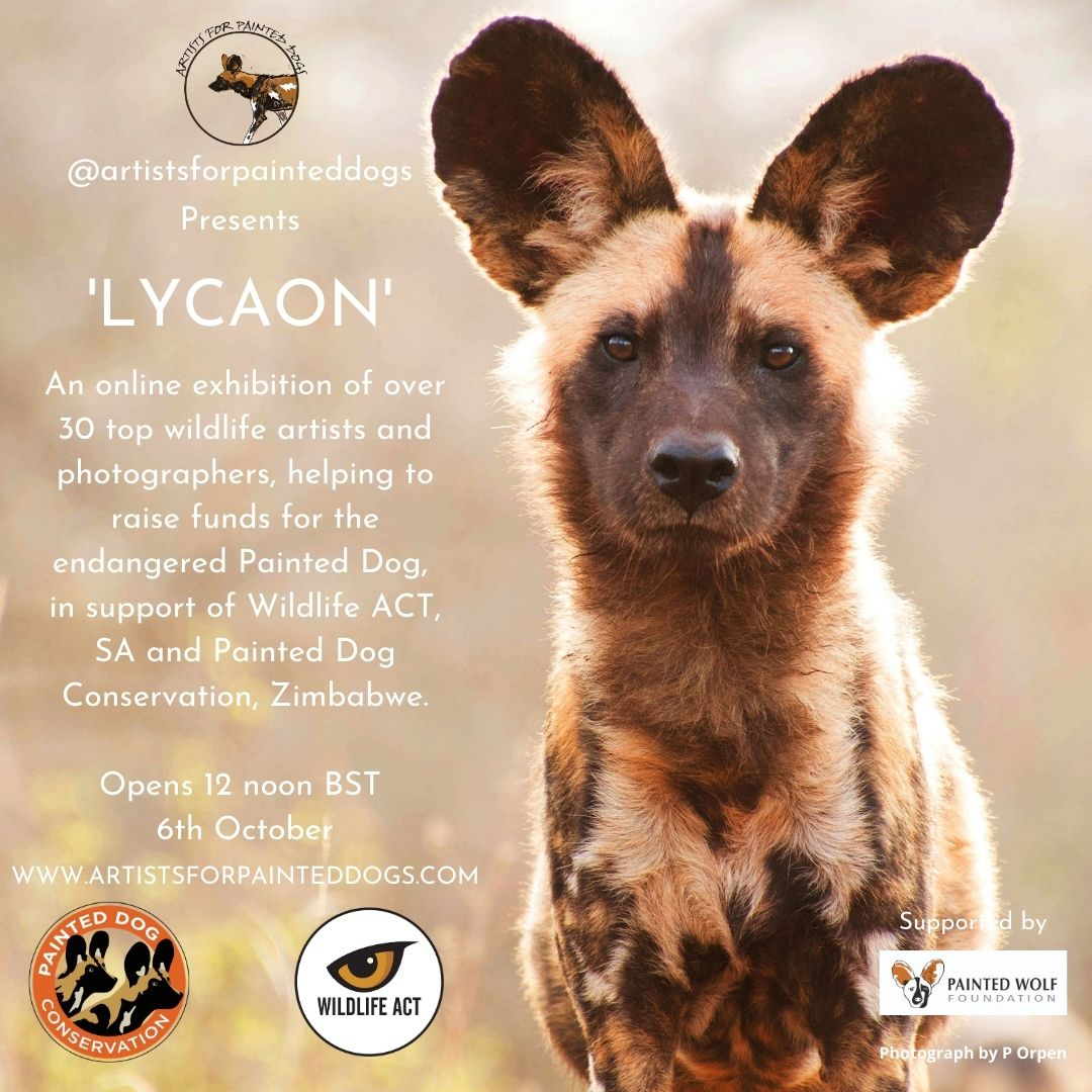 Leading Artists from Across the World Come Together for African Painted Dog Conservation