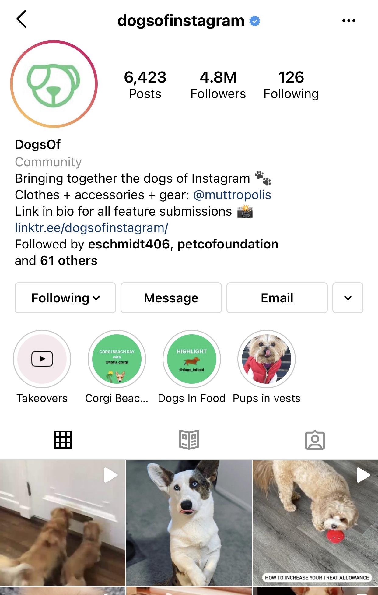 "Metamorphosis Partners Acquires ""@DogsOfInstagram"" Pet Community"