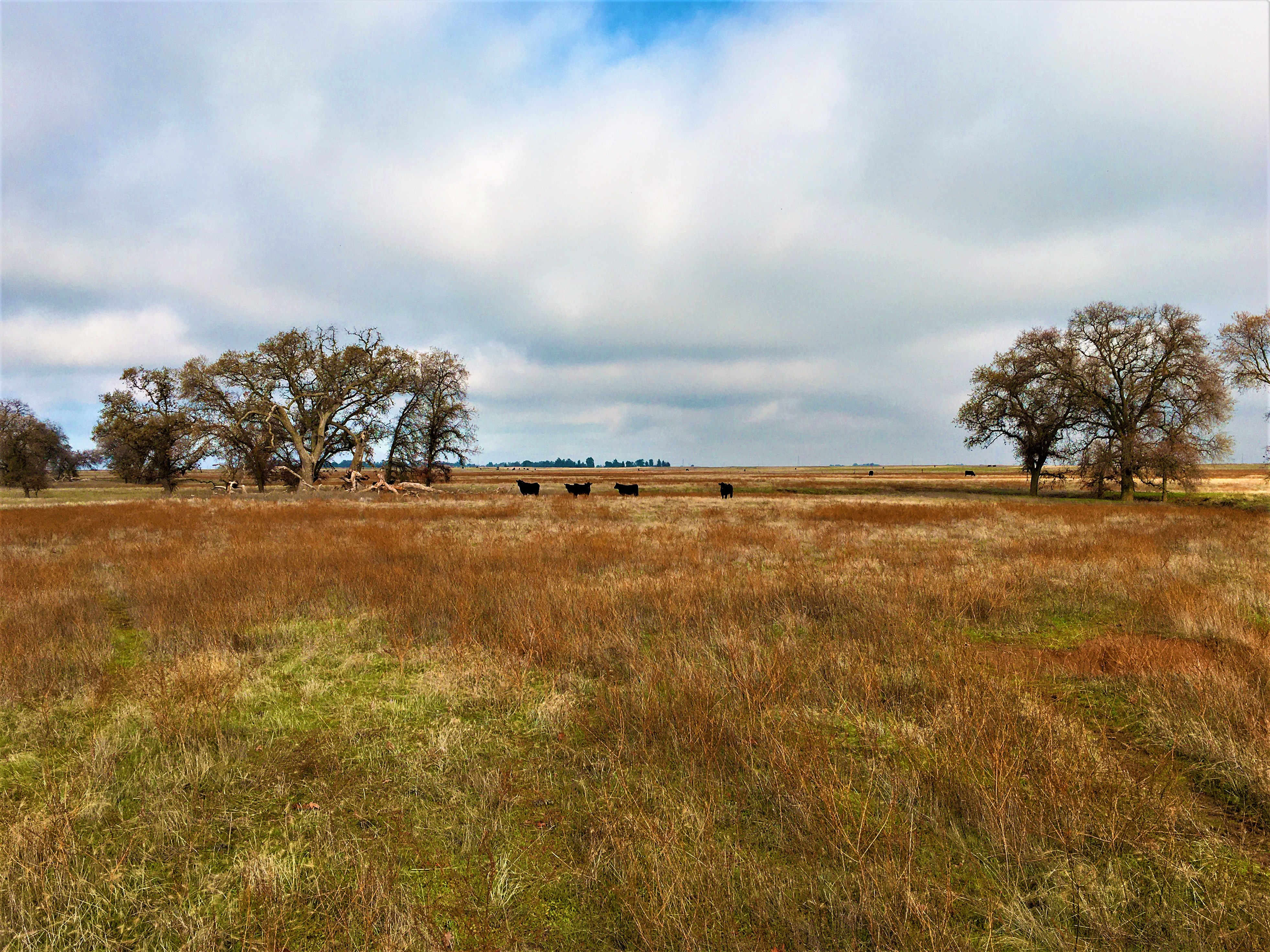 Mitigation Project in West Roseville Marries Land Conservation with Residential Development