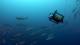 Boxfish Research Ltd.