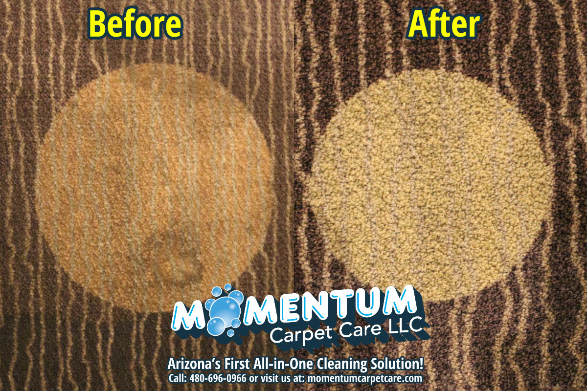 Momentum Carpet & Floor Care, LLC. Evolved Into Arizona's First All-in-One Cleaning Solution
