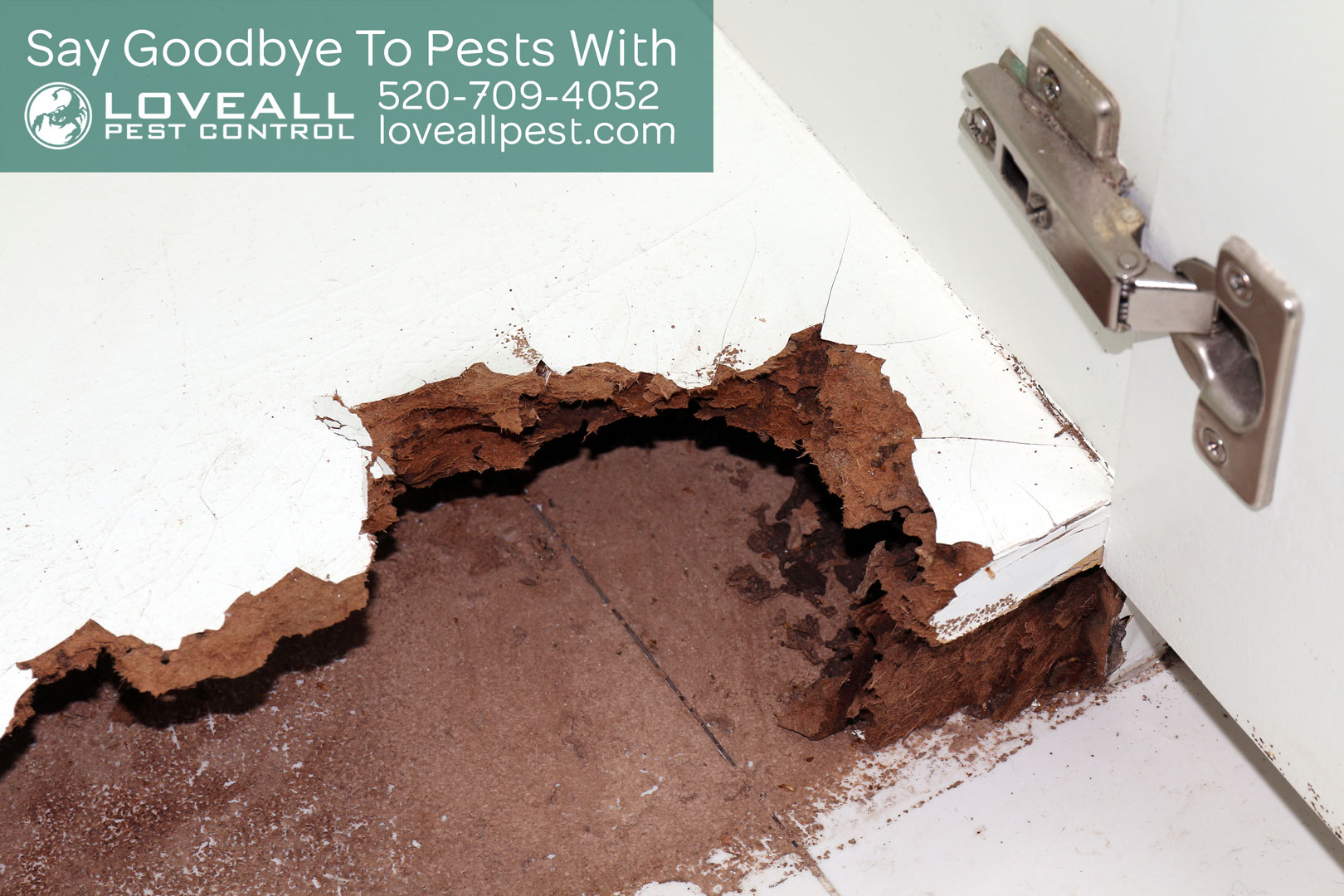 How to Stop Termites from Invading Home by Loveall Pest Control LLC