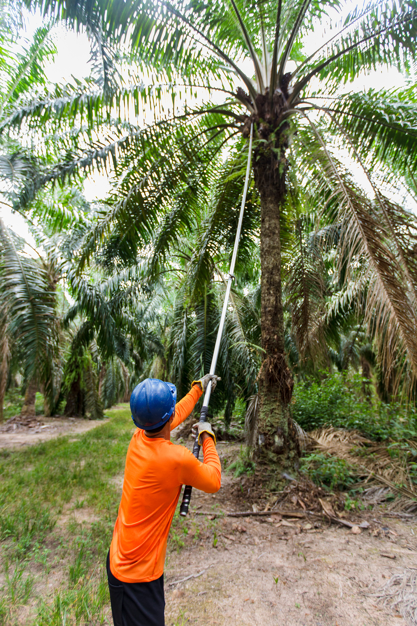 Partnership Between Agropalma (Brazil) and Ciranda (U.S.) Expands Availability of Organic Palm Oil in North America to Meet Growing Demand